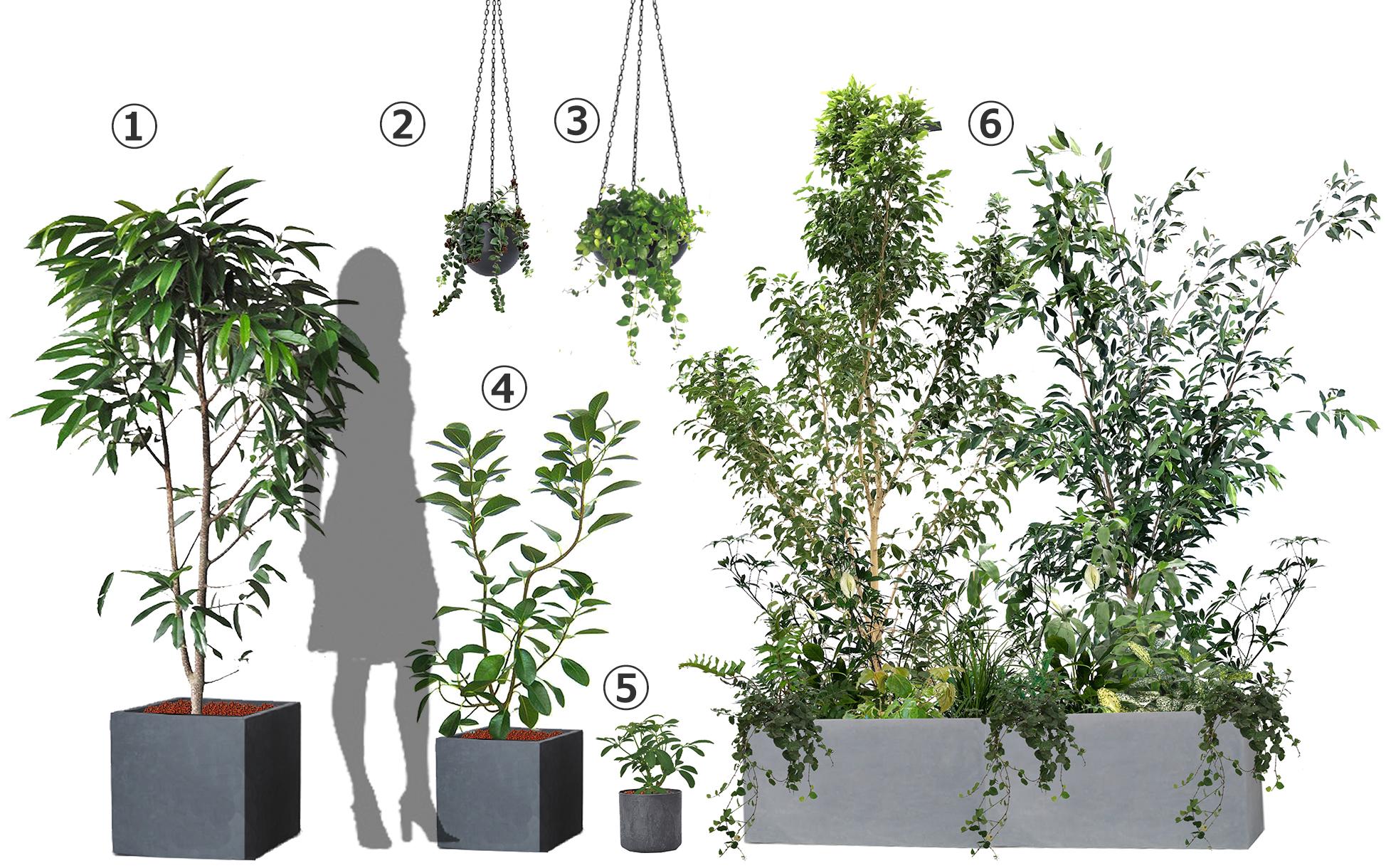 プランター植栽例