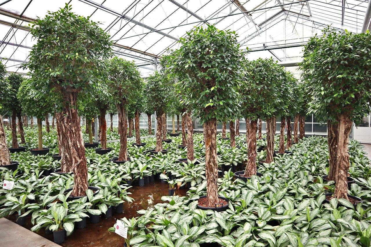 ドイツ 観葉植物